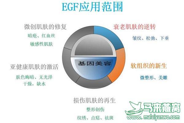 揭秘燕窝中神奇的表皮生长因子(EGF)
