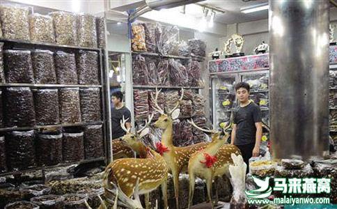 广州燕窝批发市场在哪里?
